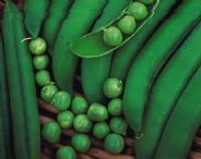 Pea premium - early type - 200 seeds